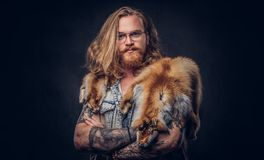 Tattoed redhead hipster male with long luxuriant hair and full beard dressed in a t-shirt and jacket holds the fox skin. On a shoulder in a studio. Isolated on royalty free stock photography