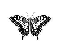 Tattoo art: Beautiful butterfly Stock Image