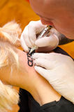 Tattoo artist drawing tattoo of broken chain on girls neck Stock Images