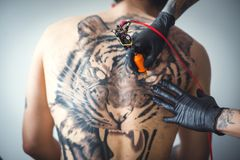 Tattoo of a tiger. A tattoo artist makes a tattoo in the salon on the back of a client. Tattoo of a tiger. The tattoo on his back. Art concept. Close up stock photos