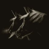 Tattoo design (horse) Royalty Free Stock Images