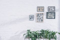 Tattoo designs in frames. In modern studio royalty free stock images