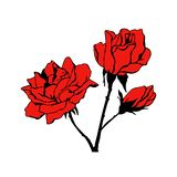 Tattoo roses vector and illustration royalty free illustration