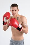 Tattooed Boxer. A young tattooed man boxes with red gloves Royalty Free Stock Photos