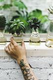 Tattooed hand holding plant pot royalty free stock photos