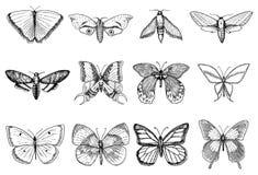 Tatuażu lub boho koszulka lub scrapbooking projekt Mistyczny ezoteryczny symbol wolność i podróż Motyl lub insekt ilustracji