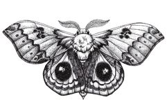 Tatuagem bonita da borboleta Suraka de Antherina Bullseye de Madagáscar Tatuagem de Dotwork Tinta preta tradicional do estilo do  Fotos de Stock Royalty Free
