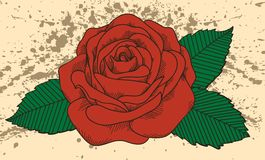 Tatuagem de Rosa no fundo velho com manchas. No antiquado Foto de Stock Royalty Free