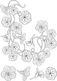 Tatuaggio di stile di nouveau di arte del fiore del nasturzio Fotografie Stock