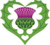 Tatuaje escocés del corazón y del cardo ilustración del vector