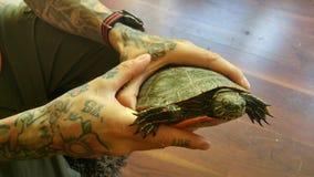 Tatuerade händer som rymmer sköldpaddan Royaltyfria Foton