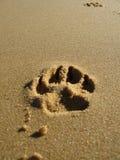 Tatze-Druck im Sand Stockfotos