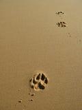 Tatze-Drucke im Sand Stockbild