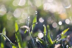 Tau auf dem Gras lizenzfreies stockfoto