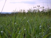 Tau auf dem Gras Stockfotografie