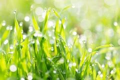 Tau auf dem Gras in der Natur stockbilder