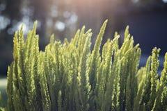 Tau auf dem Gras morgens Lizenzfreie Stockfotos