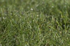Tau auf dem Gras morgens Lizenzfreie Stockfotografie