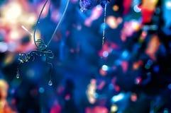 Tau auf dem langen Spinnennetz auf Traube verlässt Lizenzfreie Stockbilder