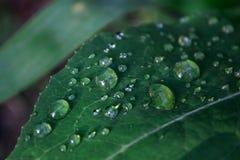 Tau auf einem grünen Blatt Stockbild