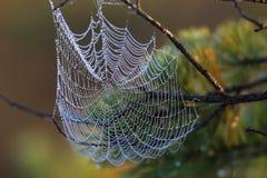 Tau auf einem Spinnennetz an der Dämmerung Stockfoto