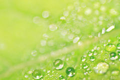 Tau auf grünem Blatt Stockfoto