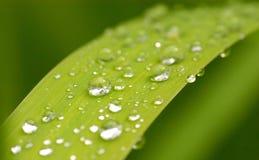 Tau auf grünem Blatt Stockbild