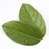 Tau auf grünen Blättern lizenzfreies stockbild