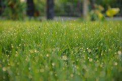Tau auf Gras Stockbilder