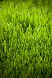 Tau auf Gras Stockfotografie