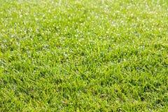 Tau auf Gras morgens Lizenzfreie Stockfotografie