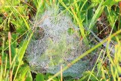 Tau auf Spinnennetz Stockbild