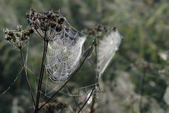 Tau auf Web der Spinne Lizenzfreie Stockbilder