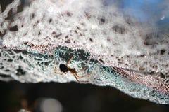 Tau der Spinne morgens Lizenzfreie Stockfotografie