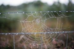Tau des frühen Morgens auf dem Netz der Spinne, das von einem Drahtzaun auf einem Gebiet hängt lizenzfreie stockfotos