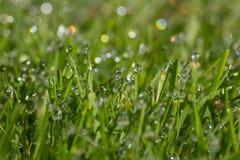 Tau im Gras ein Frühherbstmorgen stockfotos