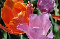 Tau-Tropfen auf Blumenblättern Stockfotos