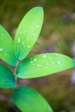 Tau-Tropfen auf grünem Blatt Stockfotos