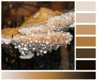 Tau-Tropfen auf Pilzen Palette mit höflichem Stockbilder