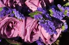Tau-Tropfen-Lavendel-Rosen Stockbilder