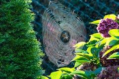 Tau und Spinne der Spinnennetze morgens Stockbilder