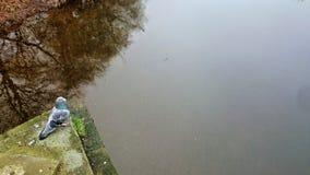 Taube über Wasser Stockfoto