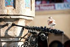 Taube auf dem Castellania-Brunnen Rhodos Griechenland stockbild