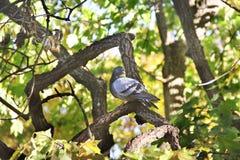 Taube auf einem Baum stockbilder