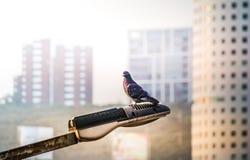 Taube auf einer Straßenlaterne Lizenzfreies Stockfoto