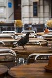 Taube auf einer Tabelle Stockbild