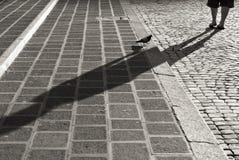 Taube auf Kopfsteintreppe in Rom, Schwarzweiss Stockfoto