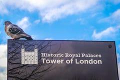 Taube auf Zeichenbrett nahe Tower von London Lizenzfreie Stockfotos