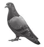 Taube in der Holzschnittart Stockbild