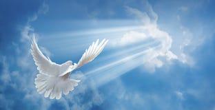 Taube in der Luft mit den breiten Flügeln öffnen sich lizenzfreie stockfotos
